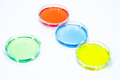 Set of Petri dishes Stock Photo