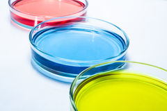 Set of Petri dishes with colored liquid Stock Photos