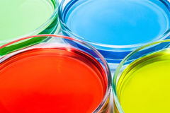 Set of Petri dishes with colored liquid Stock Photo
