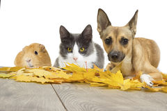 Set of pets. In autumn Stock Photos