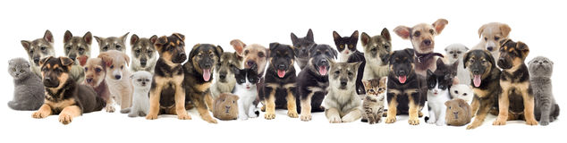 Set of pets. Cat and dog Stock Photo