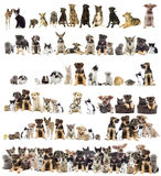 Set of pets Royalty Free Stock Image