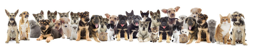 Set of pets Stock Photo