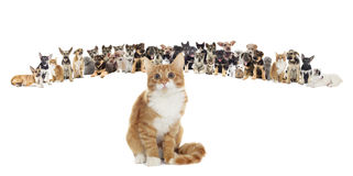 Set of pets. Cat and dog Royalty Free Stock Images