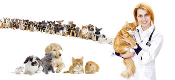 Set of pets. Cat and dog Stock Image