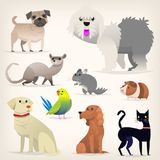 Set of pets. Set of colorful pets. Different species and kinds of breeds of dogs and cats. Isolated vector illustrations Stock Image