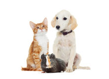 Set pets. Looking on a white background Royalty Free Stock Image