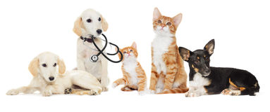 Set pets. Looking on a white background Stock Images