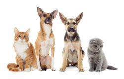 Set pets Stock Image
