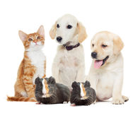 Set pets. Looking on a white background Royalty Free Stock Photography