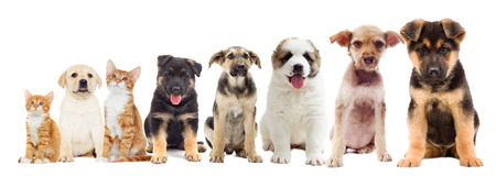 Set of pets looking Royalty Free Stock Photos
