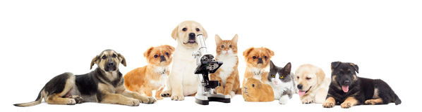 Set of pets. Looking on a white background Royalty Free Stock Photography