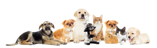 Set of pets. Looking on a white background Stock Image