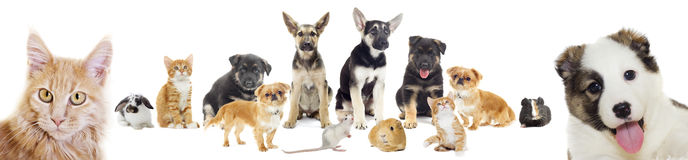 Set of pets. Puppy and kitten, set of pets stock photo