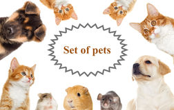 Set of pets. Puppy and kitten Stock Photography
