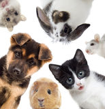 Set of pets Royalty Free Stock Photo