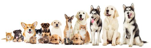 A set pets. Set pets on a white background Royalty Free Stock Photos