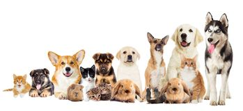 A set pets. Set pets on a white background Stock Photography