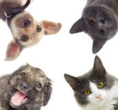 Set pets watching. On white background isolated Stock Photos