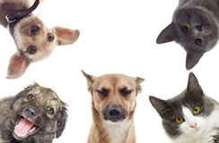Set pets watching. On white background isolated Royalty Free Stock Photos
