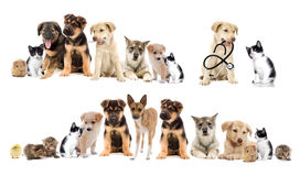 Set pets. Set of pets on white background Stock Photography