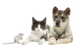 Set of pets. On a white background Stock Images