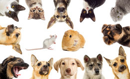 Set pets. On a white background Royalty Free Stock Photography