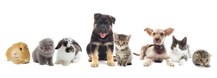 Set of pets. On a white background Royalty Free Stock Images