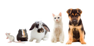 Set pets. On a white background Royalty Free Stock Image