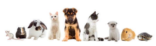 Set pets royalty free stock photo
