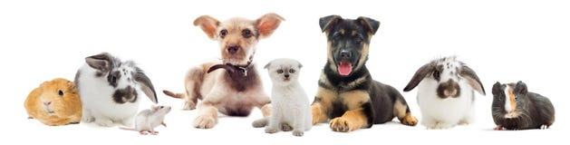 Set pets. On white background Stock Images