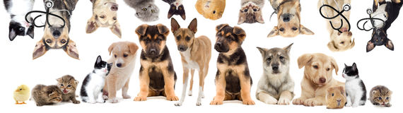 Set pets Royalty Free Stock Photography