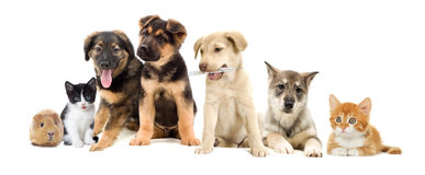 Set pets. On a white background Royalty Free Stock Photo