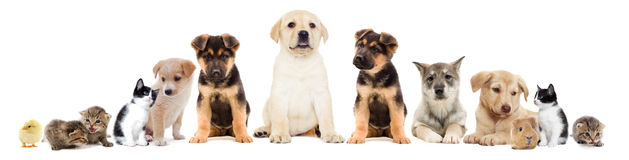 Set pets Stock Photography