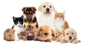 Set pets. On a white background Stock Photography
