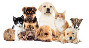 Set pets. On a white background Royalty Free Stock Photos