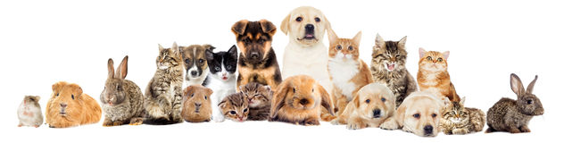 Set pets. On a white background Stock Photos
