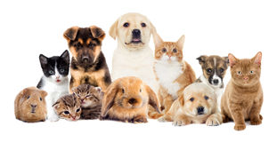 Set pets. On a white background Stock Image