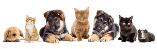 Set pets Royalty Free Stock Images