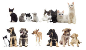 Set of pets. On a white background isolated Stock Photo