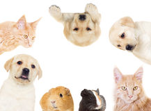 Set of pets. On a white background isolated Stock Photography