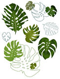 Set of philodendron leaves Royalty Free Stock Photo