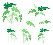 A Set of Philodendron Leaves on White Background Royalty Free Stock Image