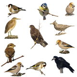 Set photographs of birds isolated Stock Image
