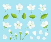 Set piękny czereśniowy drzewo kwitnie na wite tle Kolekcja różowy Sakura lub jabłczany okwitnięcie, japończyk royalty ilustracja