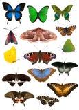 Set piętnaście motyli odizolowywających na bielu Obraz Royalty Free