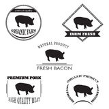 Set pig farm logo emblem. Natural and fresh farm. Royalty Free Stock Image