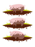 Set pig in a puddle of mud. Vector illustration. Of a flat design Stock Image