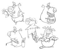 A set of pigs. Coloring book. Set of various pigs for painting Stock Images