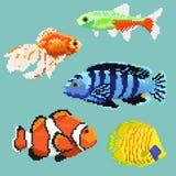 Set piksla egzota ryba Zdjęcie Stock